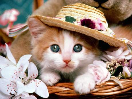 Can caring about this kitten and caring about the societal decay that surrounds us coexist? No. It's one or the other.