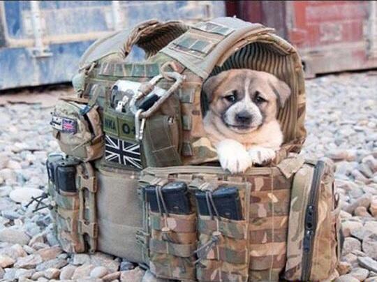 b3aa9e6408d079dc47a8b2ac883094bd--military-police-police-dogs